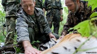 Putin, tiger
