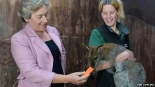 Wallaby with staff at Askham Bryan College