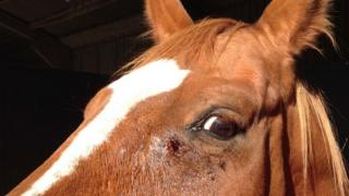 Dorothy with gunshot wound in face