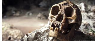 Hobbit Skull