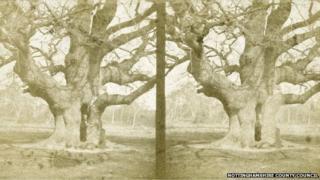 The Major Oak in Sherwood Forest