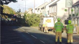Tree blown over at Llangennech, Carmarthenshire