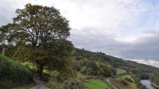 The oak tree at Tregaer, near Erwood in Powys