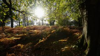 Sun shines through the trees during the autumn season in the New Forest in Hampshire