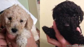 Two of the stolen Poochon parties