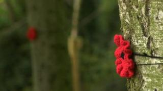 Poppy on a tree in Coventry's War Memorial Park