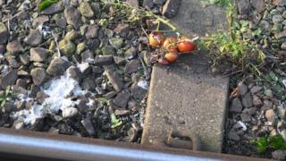 Tomatoes at Diss railway station