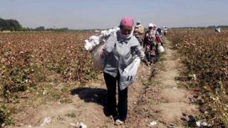 Much of Uzbekistan's cotton is picked by hand