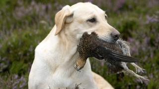dog with bird in its mouth