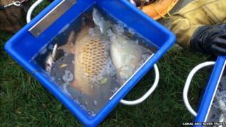 Fish in fresh water bins