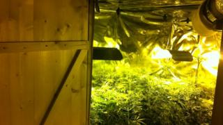 Cannabis plants found in a house in Bellanaleck