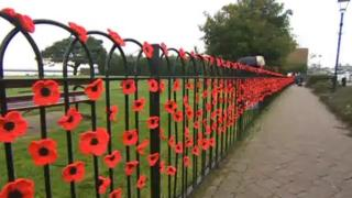 Poppies on railings