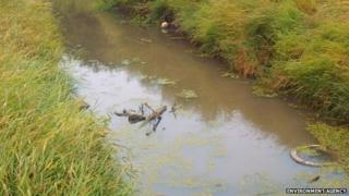 Polluted water in Swalecliffe Brook