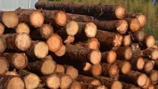 Scotland's forest and timber industries are big business