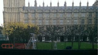 Work taking place on the lime trees at the Palace of Westminster