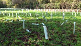Part of vandalised WW1 memorial woodland