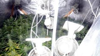 Cannabis found in Castlewellan