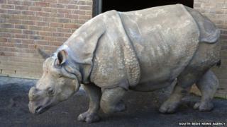 Rhino at ZSL Whipsnade Zoo