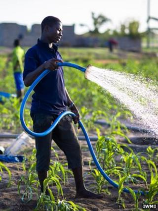 Global importance of urban agriculture 'underestimated'