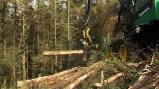 Ballaugh Plantation