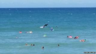 A photo of a shark leaping out of the water at Macauley's Beach, Coffs Harbour, 30 November 2014