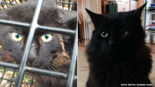 Sardine the cat with facial injury and after recuperation