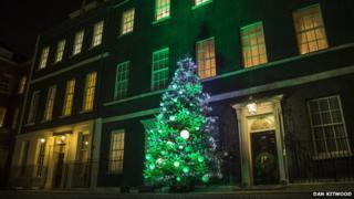 Tree outside Downing Street