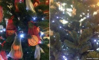 A before and after view of the tree