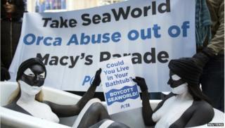 SeaWorld protestors