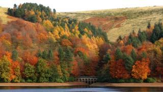 Trees on Derwent Reservoir in the Peak District