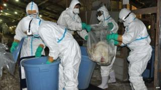 health officers slaughtering chickens at a poultry farm in Nobeoka city in Miyazaki prefecture,16 December 2014