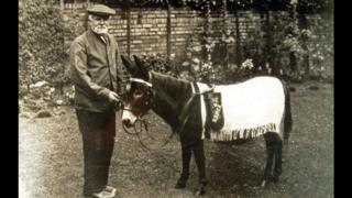 Jimmy the Donkey was bought by the RSPCA in 1920