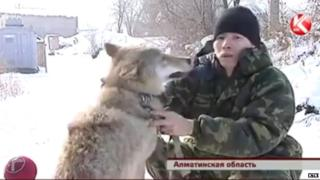 Nurseit Zhylkyshybay and his wolf