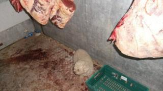 Small dog standing under sides of hanging beef