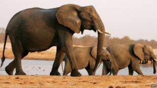 A herd of elephants walks past a watering pan in the Hwange National Park on 6 September 2012