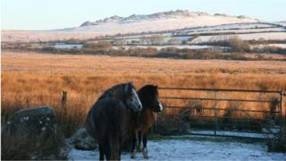 Preseli Hills ponies