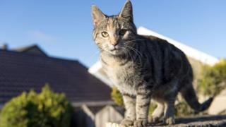 Molly the tabby cat