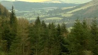 Whinlatter forest in Cumbria
