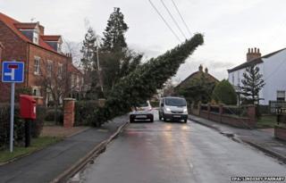 Tree resting on overhead power lines in Hessay, York