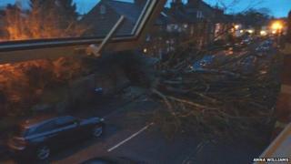 Fallen tree in Alma Place, Oxford