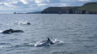 Bottlenose Dolphins in the Irish Sea