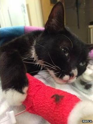 Picture of injured cat
