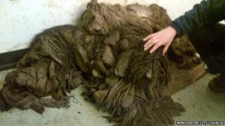 Dog found in Winchester