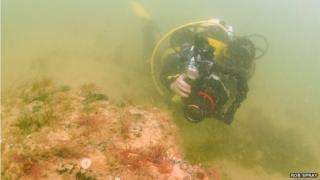 Divers discover underwater forest off Norfolk coast