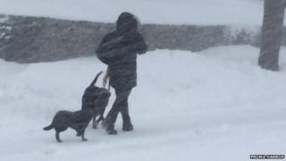 A person walks dogs during the blizzard in Rhode Island.