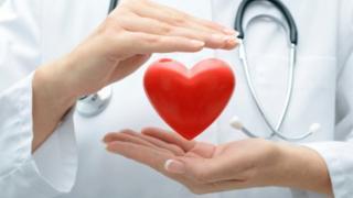 Medic holding model heart