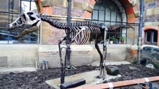 Tyrannosaurus rex sculpture at the Sedgwick Museum
