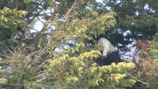 Protestor in tree