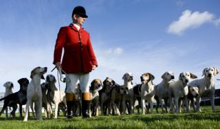 Hounds from the Vine & Craven Hunt are paraded at Newbury racecourse in 2011