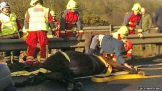 Horse being treated by a vet on the A46